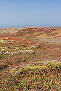 Wildflowers and multi-colored coastal grasses adorn the hills of Point Reyes National Seashore