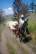 Horseback outfitters on Slough Creek Trail, Yellowstone National Park, Wyoming.