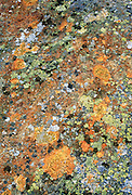 Lichen on rock inscribes orange, yellow, black and white patterns in Yoho National Park, British Columbia, Canada. This is part of the Canadian Rocky Mountain Parks World Heritage Site declared by UNESCO in 1984.