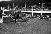 "08/05/1964<br /> 05/08/1964<br /> 08 May 1964<br /> R.D.S. Spring Show Ballsbridge Dublin, Championship Showjumping, Mr. Seamus Hayes on ""Goodbye"", winner of Championship Competition ""O"" at the Dublin Spring Show. ""Goodbye"" was owned by Mr. Joseph J. McGrath."