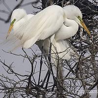 High Island Bird Sanctuary, Texas
