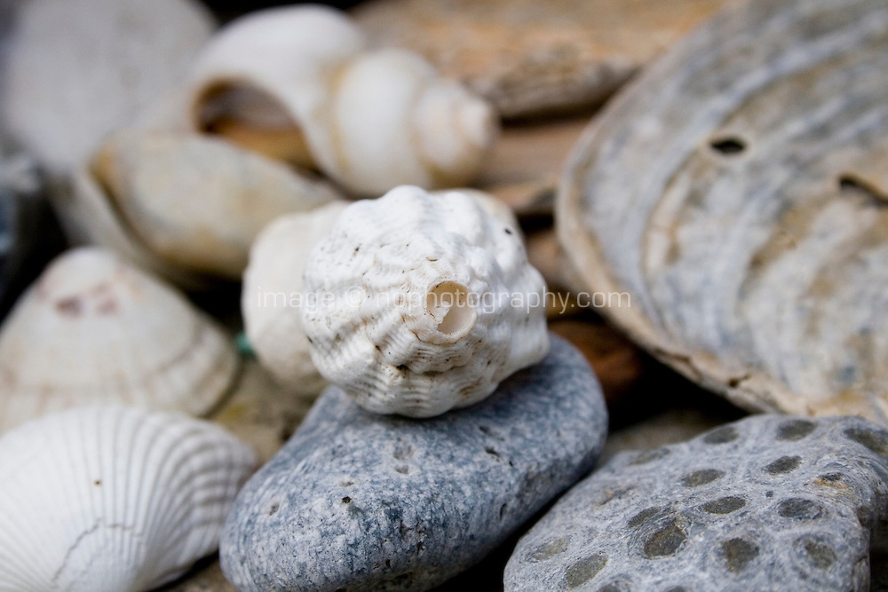 Sea shells and stones collected