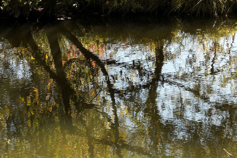 close up of trees reflecting in water