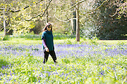 UNITED KINGDOM, London: 20 April 2016 Visitors enjoy the lovely sunshine on yet another sunny day in Kew Gardens. The warm weather is only temporary, as snow may be forecast for the weekend. Rick Findler / Story Picture Agency