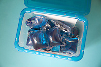 Box of Non-Bio washing machine capsules