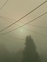 Summer fog early morning.  ©2017 Karen Bobotas Photographer