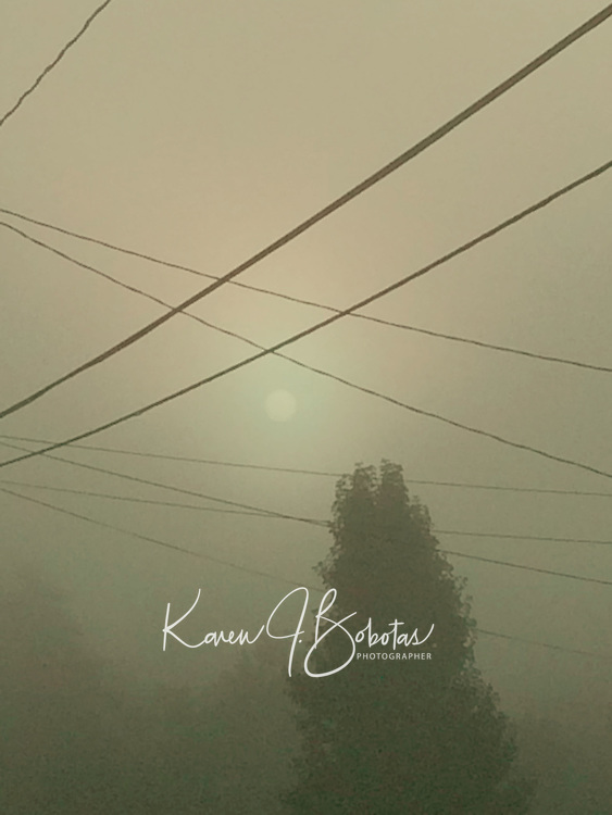 Summer fog early morning.  ©2017 Karen Bobotas Photographer