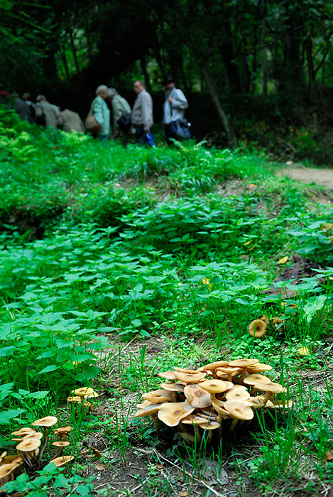 Mushrooms or toadstools growing in Krka National Park, with out-of-focus tourists in background. Krk National Park, Croatia