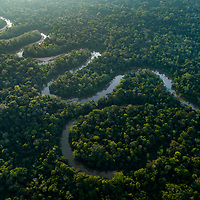 Spanning nearly 7 million square kilometers, it is difficult to conceptualize just how vast the Amazon rainforest is. Here, the Tiputini River winds its way through a tiny corner of the Amazon Basin in eastern Ecuador, eventually emptying its waters into Peru, Brazil, and then the Atlantic Ocean nearly 3 thousand kilometers away. Having lost nearly 20% of its forest cover in recent decades, the Basin is still under siege today from threats such as mining, oil drilling, and clearing for farming. Despite these losses, much still remains intact and just as imperative as ever to continue protective efforts for these invaluable forests.