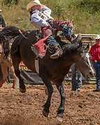 Bareback rider Clayton Biglow from Clements, California scores 82.0 at the 62nd annual Mother Lode Round-up on Sunday, May 12, 2019 in Sonora, California.  Photo by Al Golub