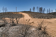 Burned forrest after wildfires near Mariposa, California USA 2017