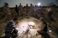 Volunteer tourists watching a female turtle lay her eggs under the light of a full moon on a remote beach on the west coast of Cape York in far northern Australia.