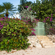 Bougainvillea Flowers and Vegetation along the Beach in Holetown, Barbados on the West Coast