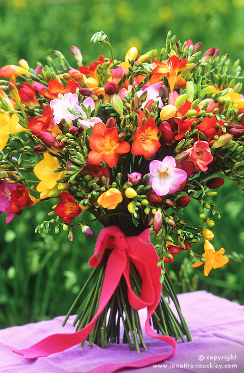 Hand tied bunch of freesias