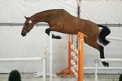 068, Honeypenny W<br /> Vrijspringen Nationale Merriekeuring, 3 jarige springmerries <br /> KWPN Paardendagen Ermelo 2015<br /> © Hippo Foto - Dirk Caremans