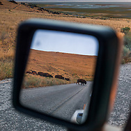 https://Duncan.co/bison-in-rear-view-mirror