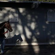 A race horse heads back to the stables after racing, passing the parade ring stables in the later afternoon sun at Belmont Park during the Jockey Club Gold Cup Day, Belmont Park, New York. USA. 28th September 2013. Photo Tim Clayton