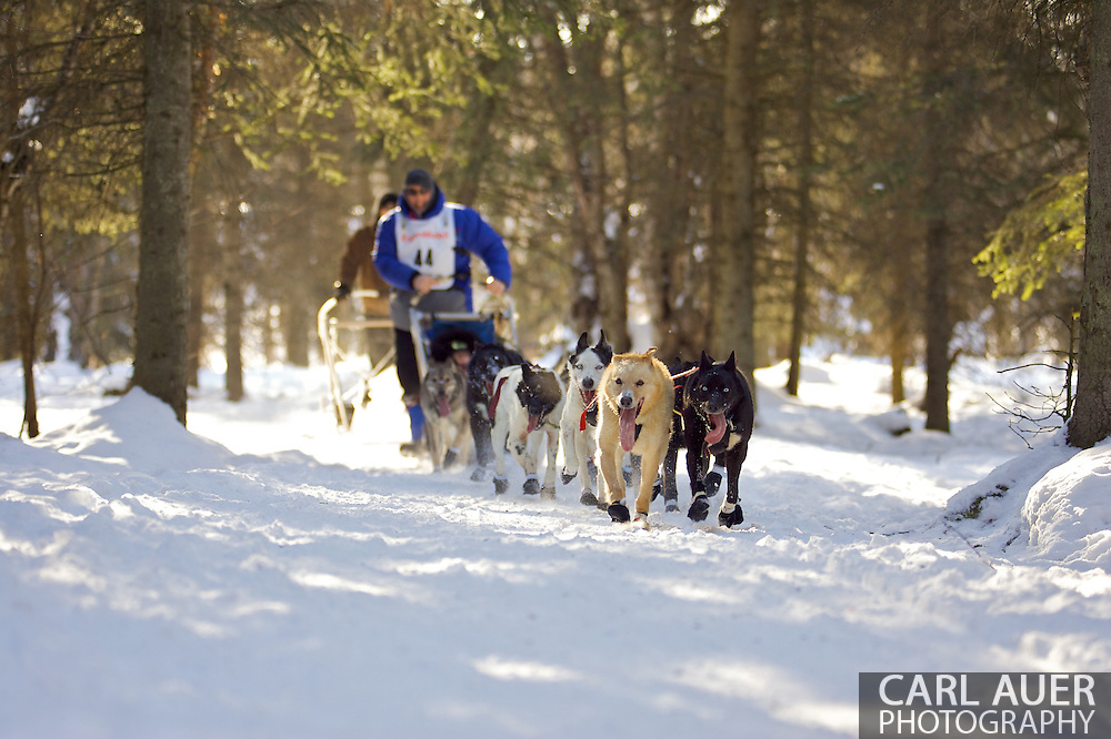 March 7th, 2009:  Anchorage, Alaska - John Baker of Kotzebue, Alaska moves through the Behm Lake woods during the 2009 Iditarod.