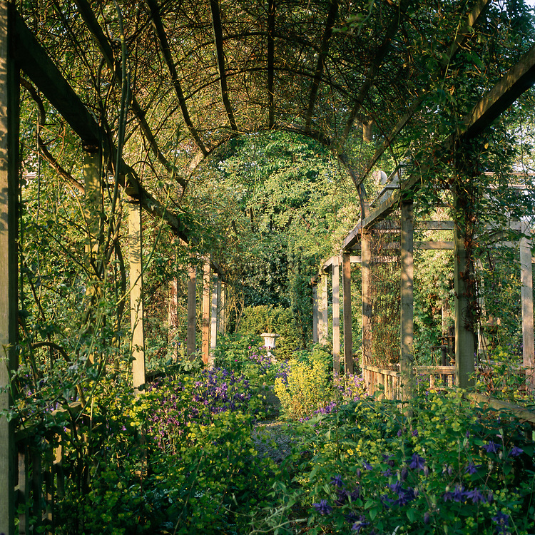 Aquilegias and Euphorbias growing  under  covered pergola, Bryan's Ground, Herefordshire