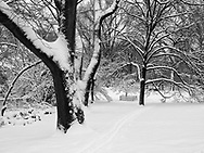 Snow near East 79th street in Central Park