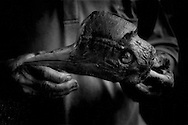"""Kelabit man holds the skull of a helmeted hornbill, an endangered species, delivered to his house freshly killed by a Penan hunter.  The bird's are valued for hornbill ivory found in their thick bill and their long tail feathers, which are used as decoration for Dayak people's ceremonial headware.  Despite being one of several species of hornbill indigenous to Borneo, the Kelabit do not consider it a hornbill and have a separate name for the helmeted hornbill, """"bonudun"""".  Long Lellang, Sarawak, Malaysia.  Despite seeing posters, distributed by the Malaysian government, with illustrations depicting protected animals and the fines for killing them, any animal still seem to be fair game to local hunters."""