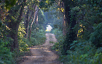 View of a road in Sal Forest in Bardia National Park, Nepal