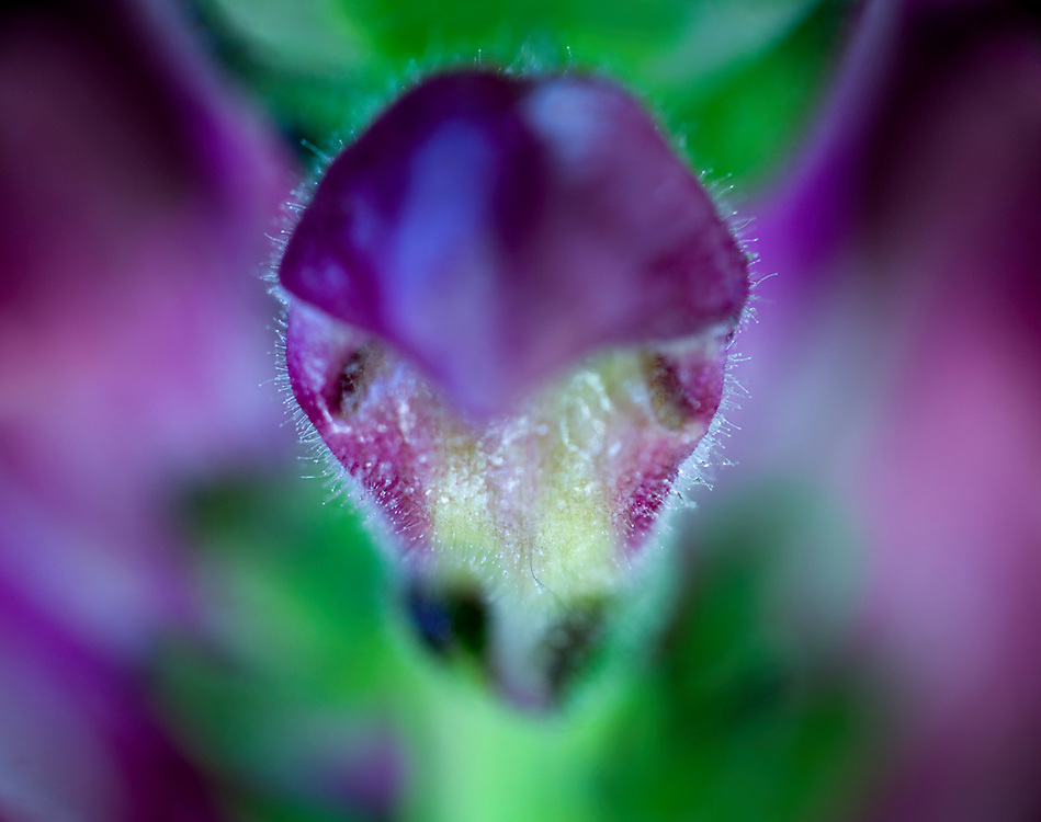 Macro shot of a flower that looks like a Mantis.