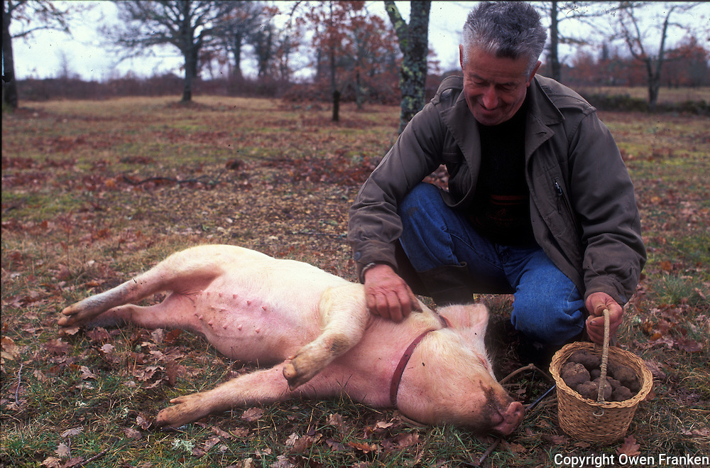 French truffle hunter with his pig, in the Perigord region of southwest France - © Owen Franken