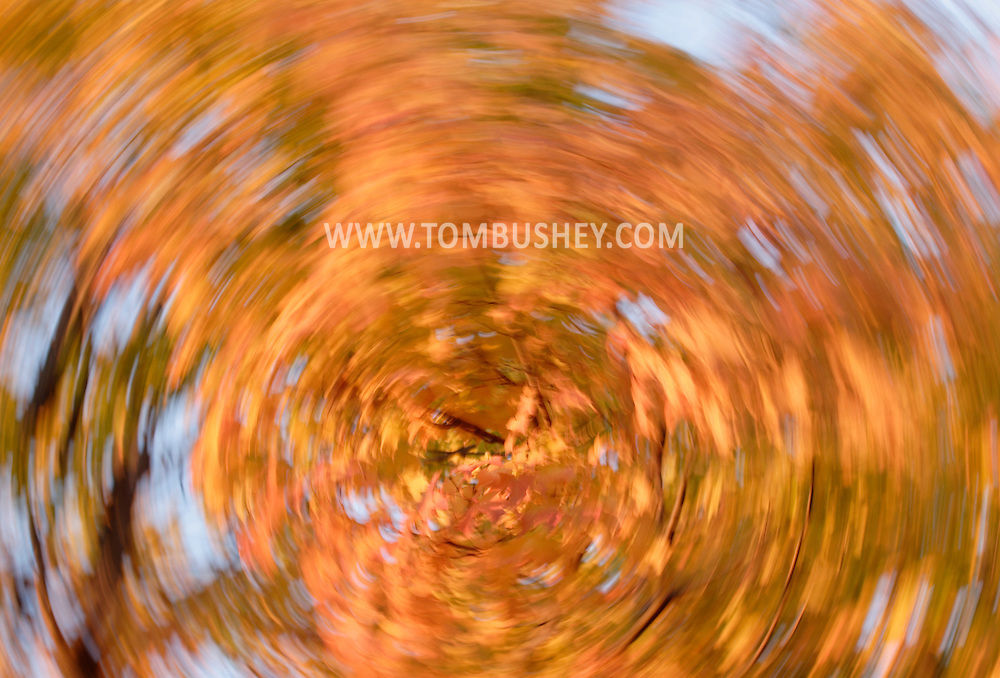 Middletown, NY - Yellow and orange maple leaves a blurred by camera movement during a long exposure on Oct. 31, 2007.