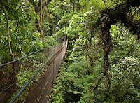 Suspension bridge winds through the rainforest canopy in Costa Rica