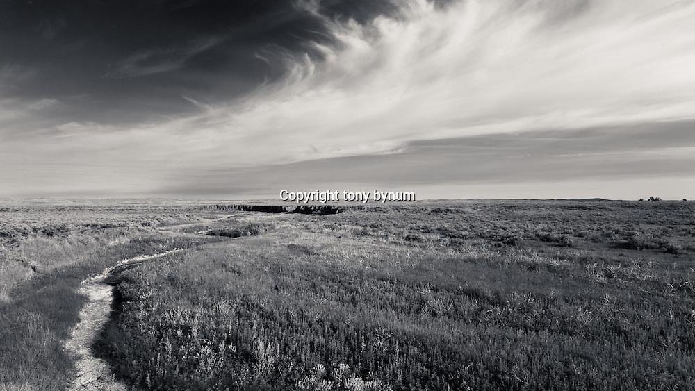 wild prairie of eastern montana conservation photography - montana wild prairie