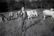 young boy herding cows 1950s France Languedoc