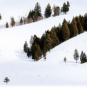 Snow blankets Grand Teton and Jackson Hole valley with the shapes of wintering trees during winter in Grand Teton National Park, Wyoming.