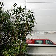 Nederland Rotterdam 24 maart 2008 20080324 Foto: David Rozing ..Geluidsscherm of geluidswal op snelweg A13 die geluidsoverlast moet voorkomen voor de wijk die pal naast de snelweg ligt, op de voorgrond bamboe..Foto David Rozing