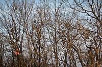 DEER HUNTER WEARING BLAZE ORANGE USING A BLACK RIFLE FROM A LADDER STAND