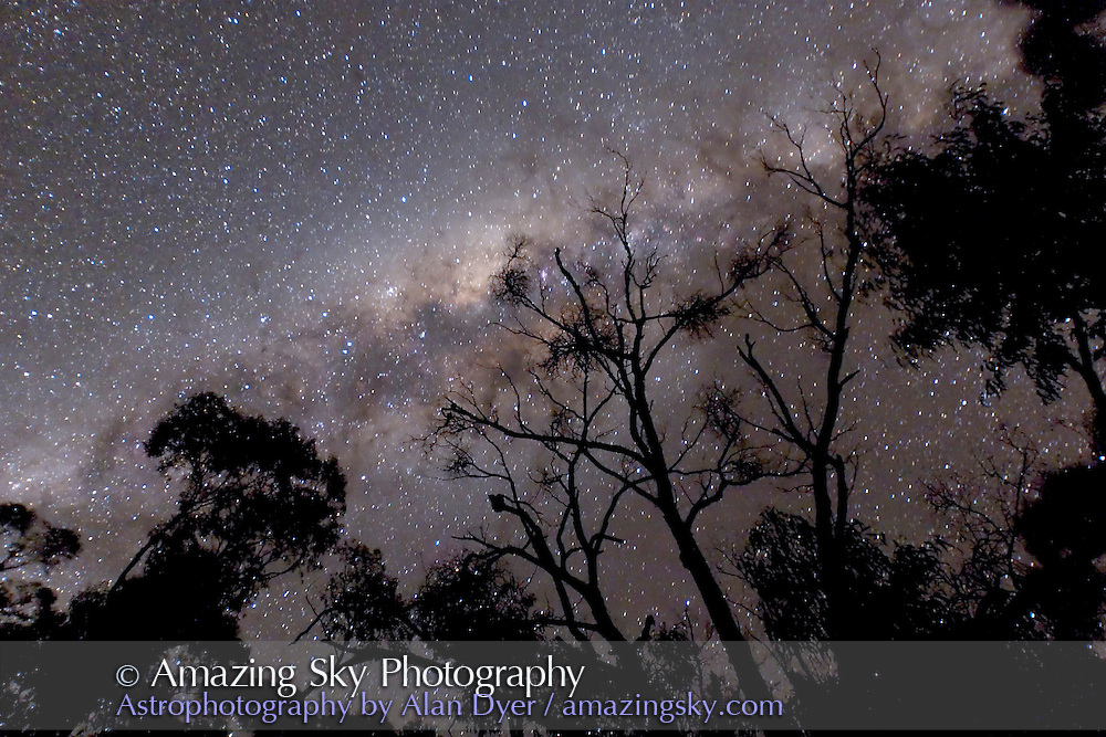 Milky Way in Trees -- fixed camera on tripod. With Canon 20Da at ISO3200 for 40s with Canon 16-35mm L Lens at f/2.8. Taken from near Coonabarabran, NSW, Australia, July 2006.