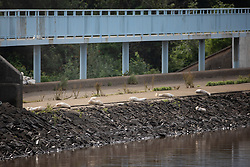 © Licensed to London News Pictures. 03/08/2019. Whaley Bridge, UK. Sandbags indicate the line of the top of the reservoir's slipway where water had been overflowing following heavy rains . The water level has dropped approximately one metre . The town of Whaley Bridge in Derbyshire remains evacuated after heavy rain caused damage to a slipway on the Toddbrook Reservoir , threatening homes and businesses with flooding. Photo credit: Joel Goodman/LNP