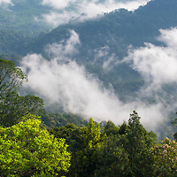Low hanging cloud passing above the rainforest, Gunung Silam, Sabah, Malaysia, Borneo, South East Asia.