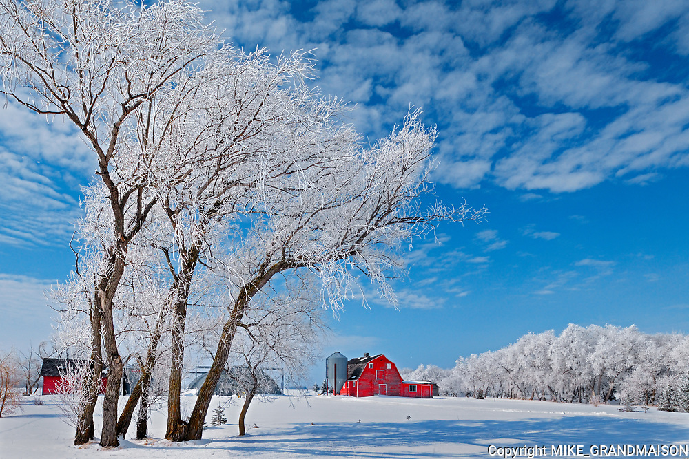 Hoarfrost coated trees and red barn<br />