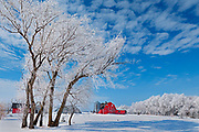 Hoarfrost coated trees and red barn<br />Hazelridge<br />Manitoba<br />Canada