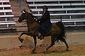 17A WH 15.2 & Under Amateur Specialty