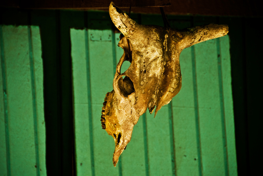 The Skull of a Nicaraguan Bull hanging from a cabana on Little Corn Island.