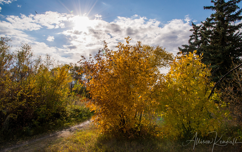 Scenes and details of fall foliage and autiumn colors in Wascana Centre, Regina, Saskatchewan<br /> <br /> More about this series of images on the blog: https://goo.gl/4kPdmL