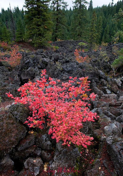 Fall colors on Santiam Pass on the crest of the Cascades.