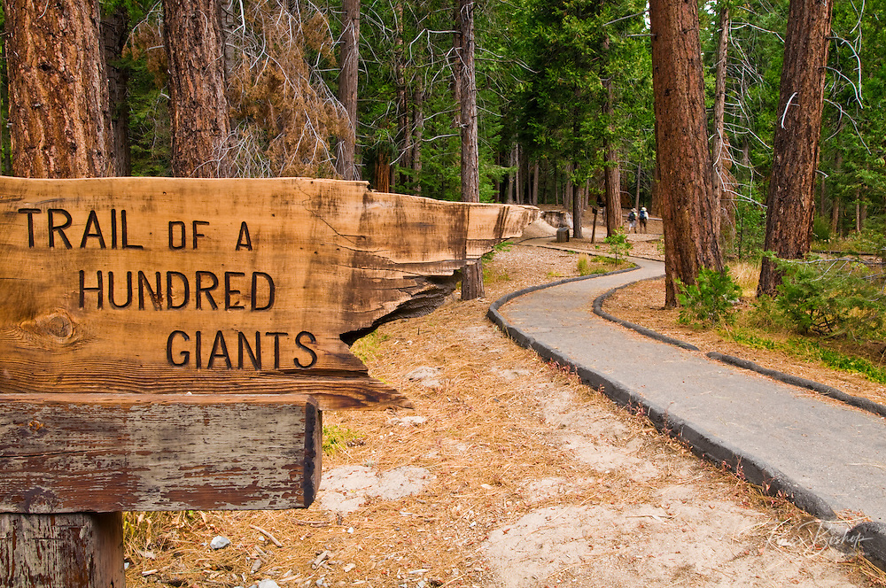 Trail of a Hundred Giants (hikers visible), Giant Sequoia National Monument, Sierra Nevada Mountains, California