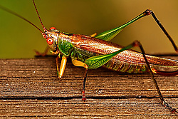 I photographed this grasshopper at Busch Wildlife in Missouri on a beautiful, sunny and windy day.