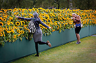 Amsterdam, 06-09-2015<br /> <br /> <br /> To celebrate the new entrance of the Van Gogh Museum in Amsterdam was there a labyrinth of sunflowers on the Museumplein.<br /> <br /> As many as 125 000 sunflowers came on the weekend of 5 and 6 September to stand on an area of 7000 square meters, nearly half of the square. Visitors could immediately see the new entrance, which was be officially opened on 4 September.<br /> <br /> In the labyrinth three so-called Van Gogh inspiration Decorated, with performances by singer-songwriters. Visiters were free to take  home as many sunflowers as they wished.<br /> <br /> <br /> Royalportraits Europe/Bernard Ruebsamen
