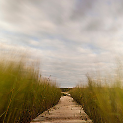 The boardwalk through the tidal marsh at Massachusetts Audubon's Wellfleet Bay Wildlife Sanctuary. Wellfleet, Massachusetts. Cape Cod.