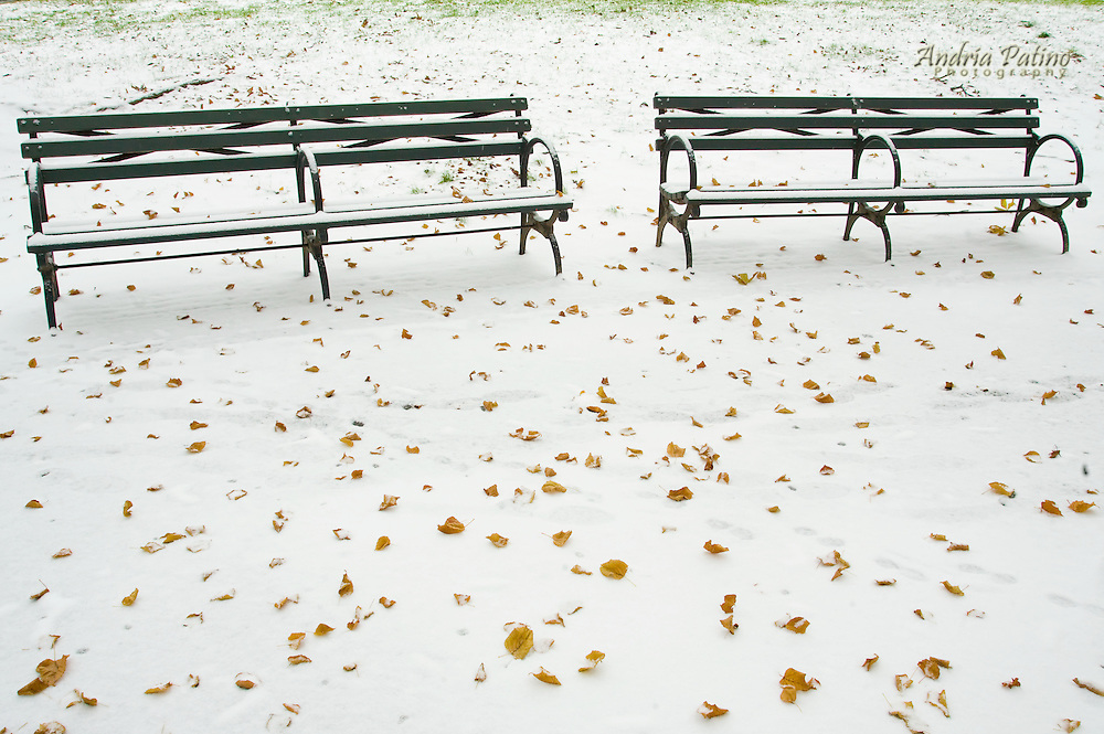 Benches in snowy Park, NYC