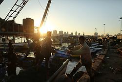 November 8, 2016 - Gaza, gaza strip, Palestine - Palestinian fishemen collect fish at the port in Gaza City on Nov. 8, 2016. (Credit Image: © Majdi Fathi/NurPhoto via ZUMA Press)